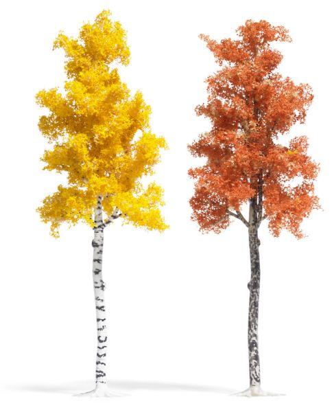 Platane und Birke Herbstbraun