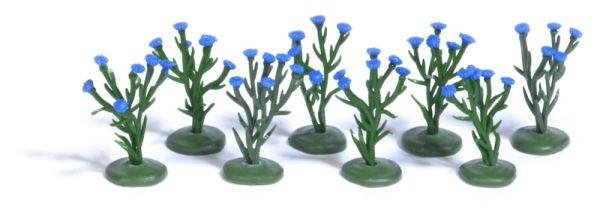 8 Kornblumenpflanzen