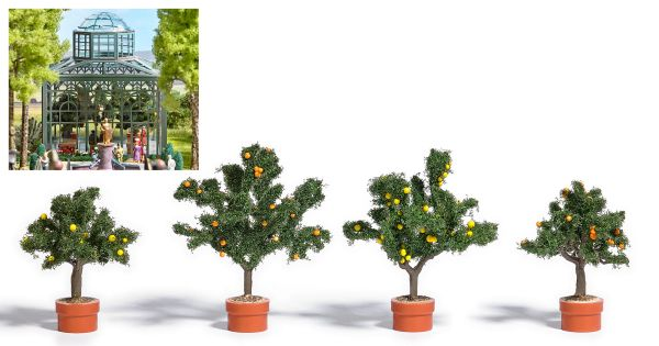 Vier Zitrusbäume in Pflanzkübel