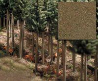 Nadelwaldboden
