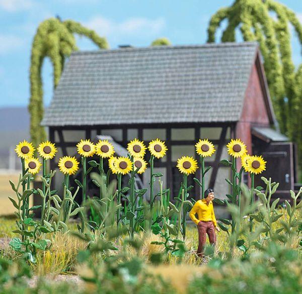Riesen-Sonnenblumen