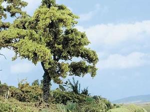 BUSCH Bäume und Büsche
