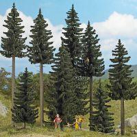 Fichten-Wald