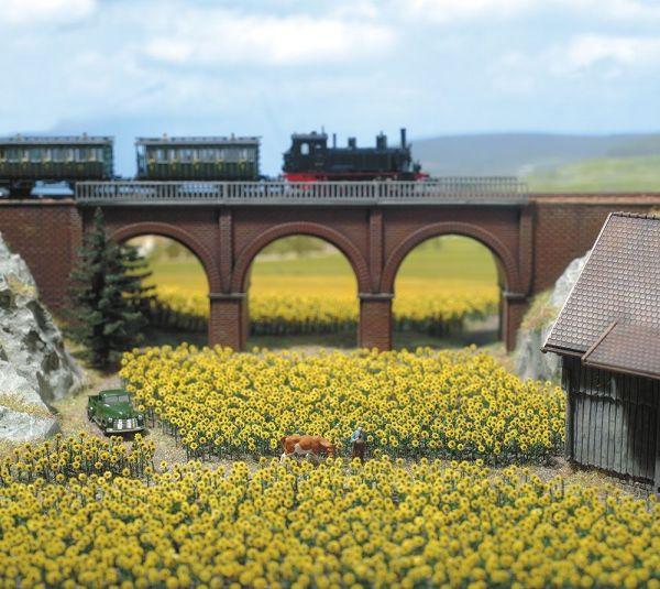 96 Sonnenblumen