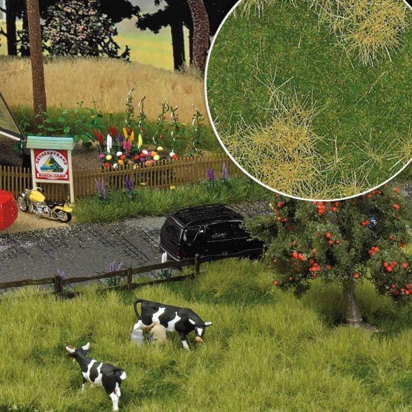 »Groundcover«-Bodendecker: Frühlingsaue