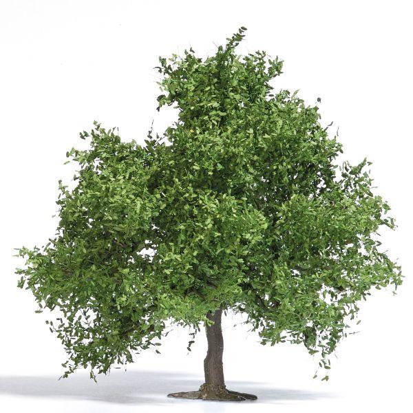 Obstbaum/kleine Eiche 95 mm, Frühling