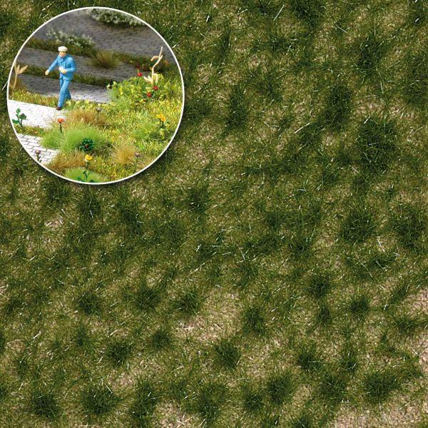 Grasbüschel Spätsommer
