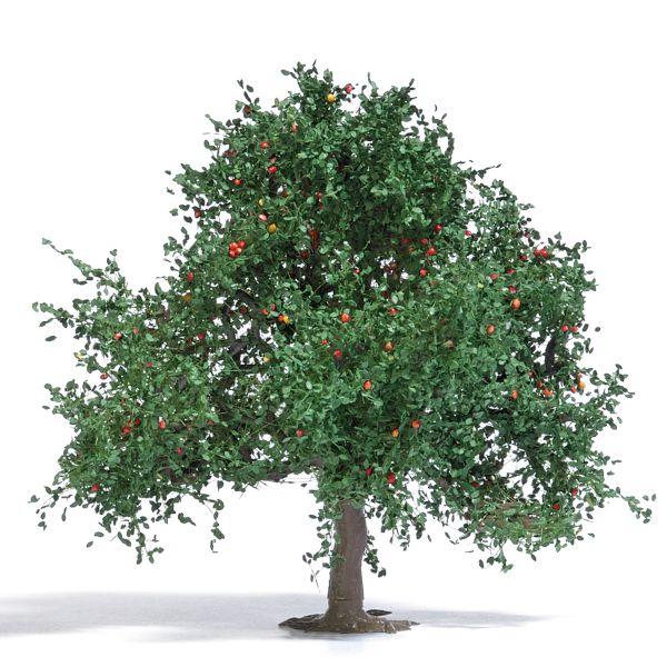 Apfelbaum 75 mm, Sommer