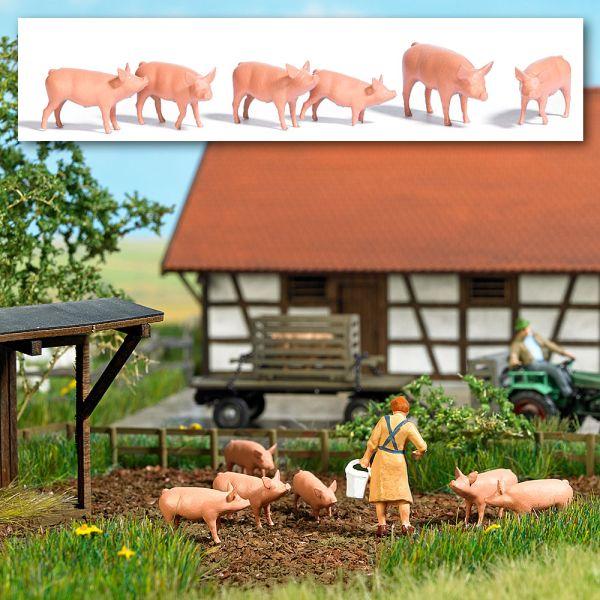 Sechs Schweine