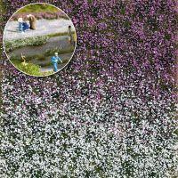 Blütenbüschel Spätsommer