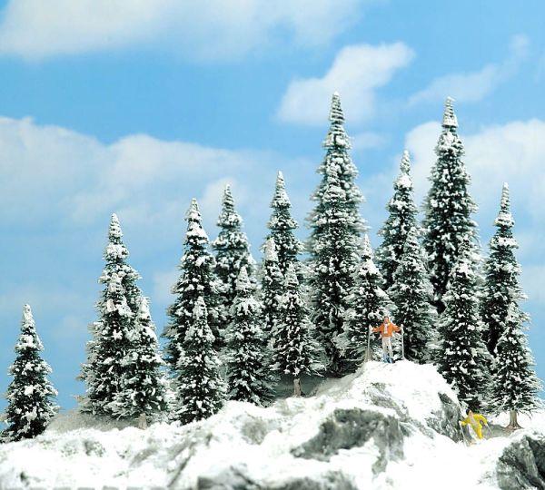 20 Schneetannen